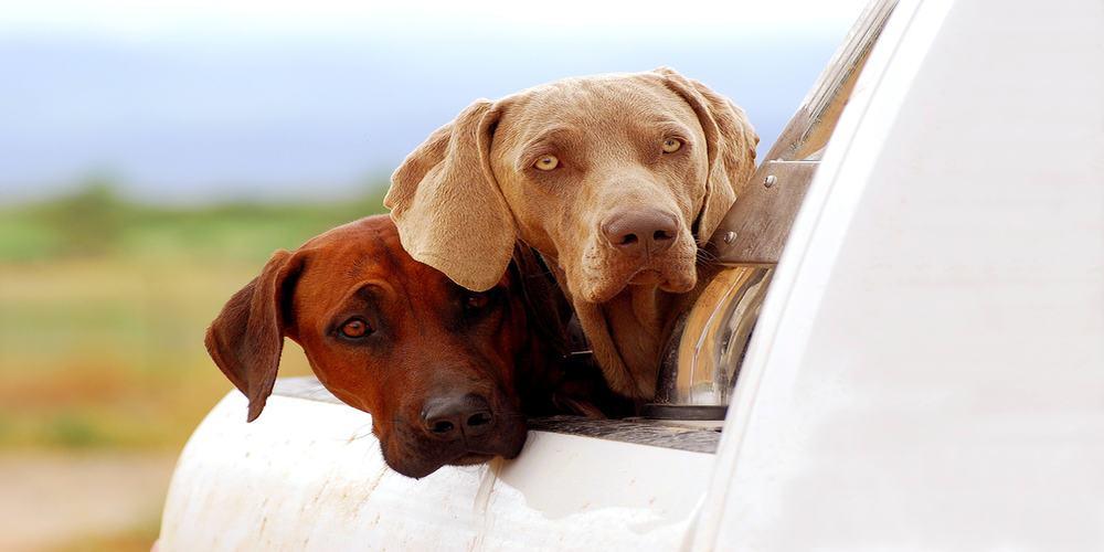 Pets transportation